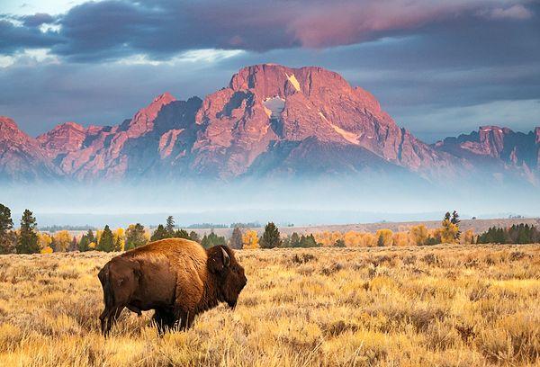 Wyoming-600x408
